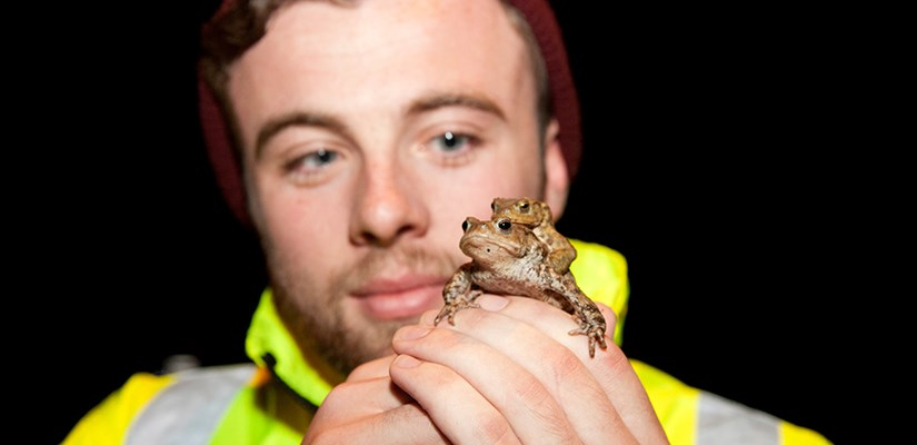 Oxfordshire highways team get toads out of a hole